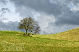 Feldbäume bei Schmalenbergham